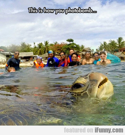 This Is How You Photobomb...