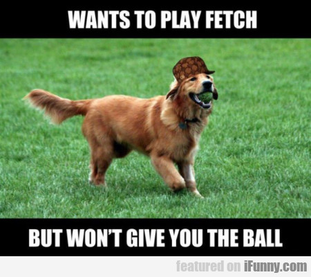 the dog wants to play fetch