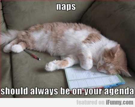 naps should be always on your agenda