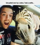 Got Pulled Over By A Zebra...