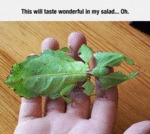 This Will Taste Wonderful In My Salad...
