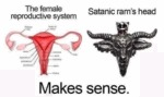 The Female Reproductive System...