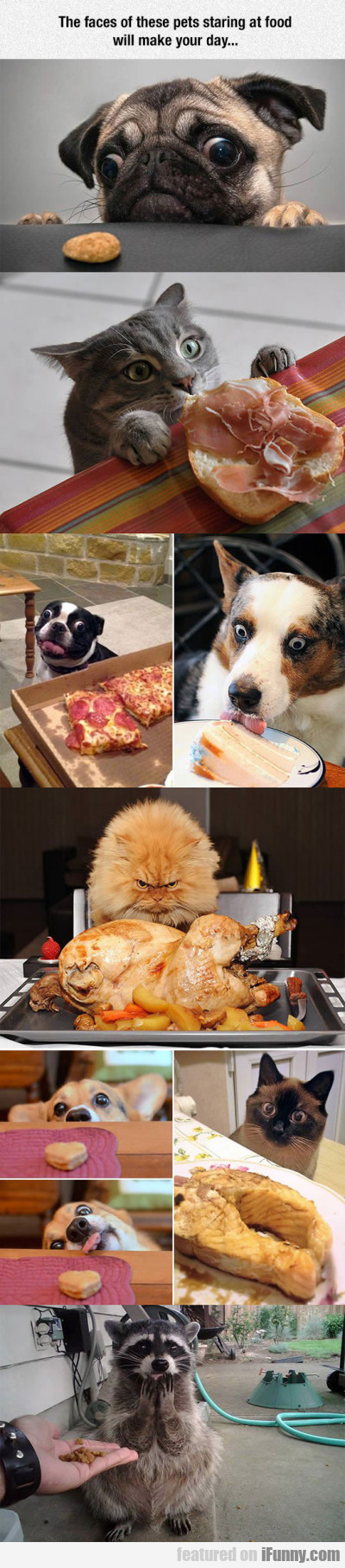 The Faces Of These Pets Staring At Food