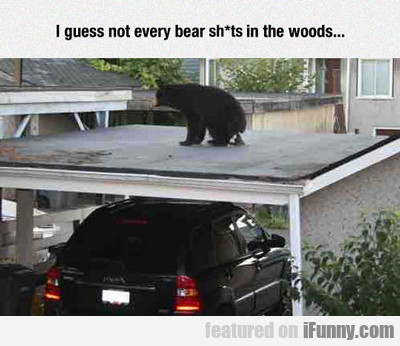 i guess not every bear...