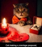 Cat Making A Marriage Proposal...