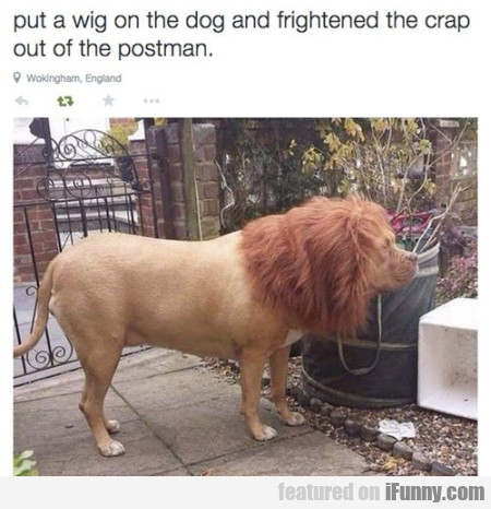Put A Wig On The Dog...