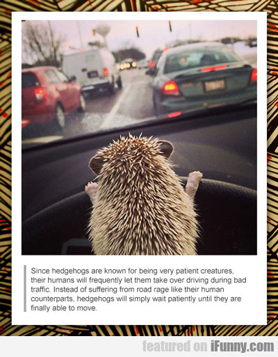 Since Hedgehogs Are Know For Being Very Patient...