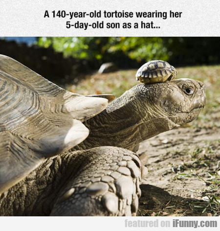 A 140-year-old Tortoise...