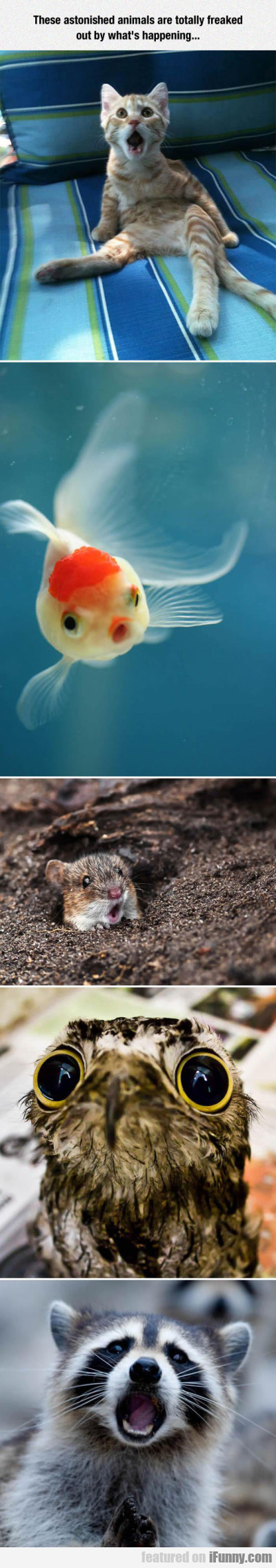 These Astonished Animals Are Totally Freaked