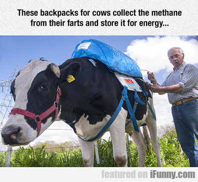 These Backpacks For Cows...