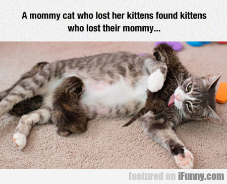 A Mommy Cat Who Lost Her Kittens...