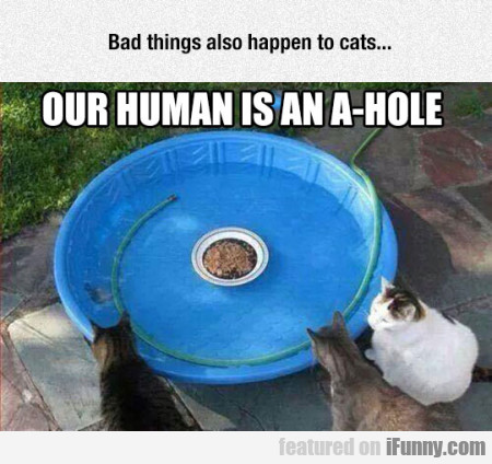 Bad Things Also Happen To Cats