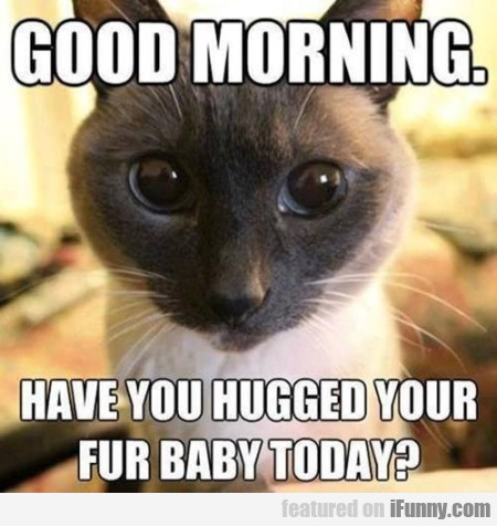 Have You Hugged Your Fur Baby Today?