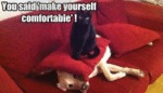 You Said ' Make Yourself Comfortable '