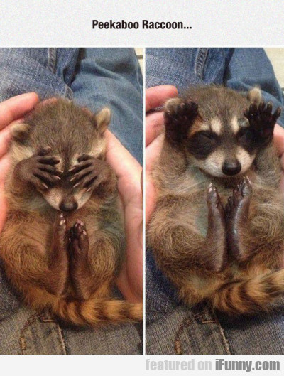 Peekaboo Raccoon