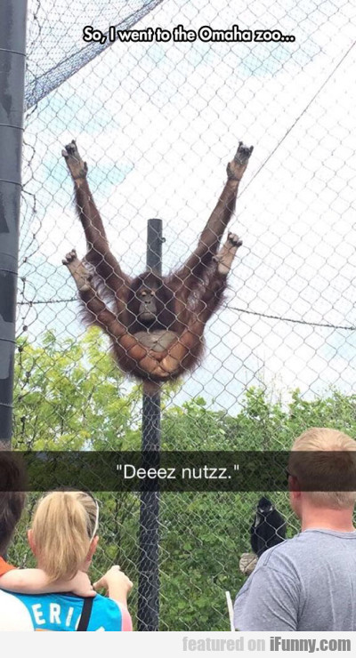 So, I Went To The Omaha Zoo...