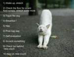 Cats Decalogue