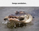 Savage Cannibalism...