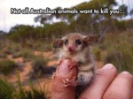 Not All Australian Animals...