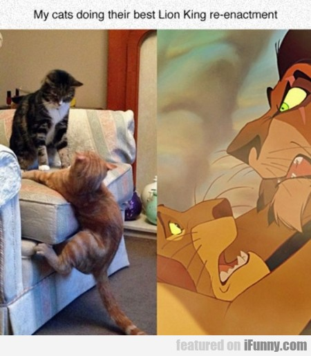 my cats doing their best lion king