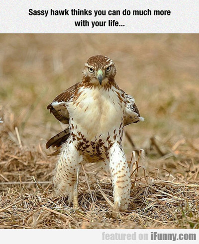 Sassy Hawk Thinks You Can Do Much More...