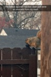 The Fattest Squirrel I Have Ever Seen...