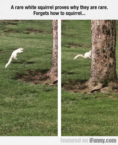 a rare white squirrel...