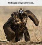 The Thuggest Bird You Will Ever Meet...