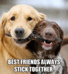 Best Friends Always Stick