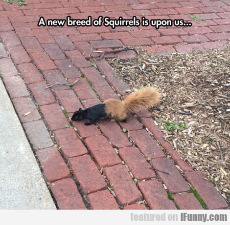 A New Breed Of Squirrels