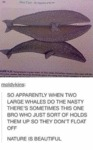 So Apparently When Two Large Whales Do The Nast