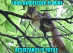 Your Birdfeeder Is Mine Resistance