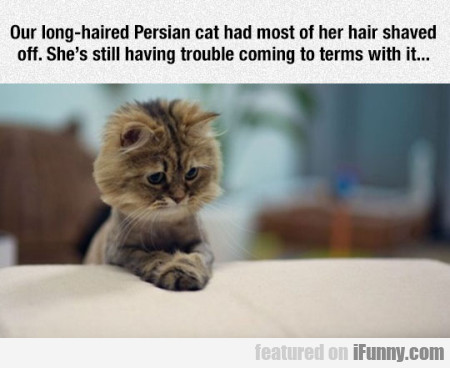 Our Long-haired Persian Cat Had Most Of Her....
