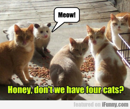 Meow Honey Dont We Have Four