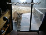Pssst, Hey, Let Me In. I'm A Kitty Cat...