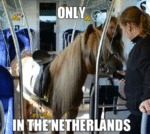 Only In The Netherlands...