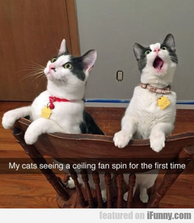 My cats seeing a ceiling fan spin for the first...
