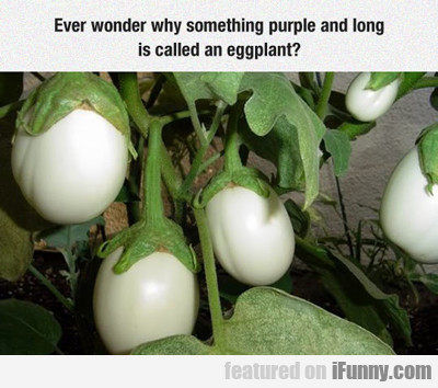 Ever Wonder Why Something Purple...