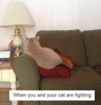 When You And Your Cat Are Fighting
