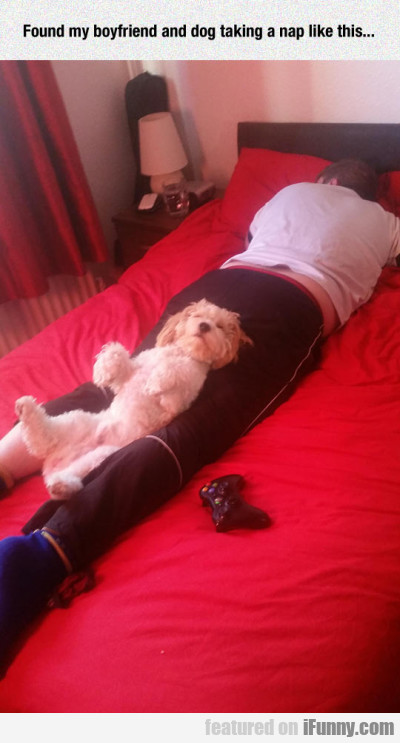 Found My Boyfriend And Dog Taking A Nap Like...