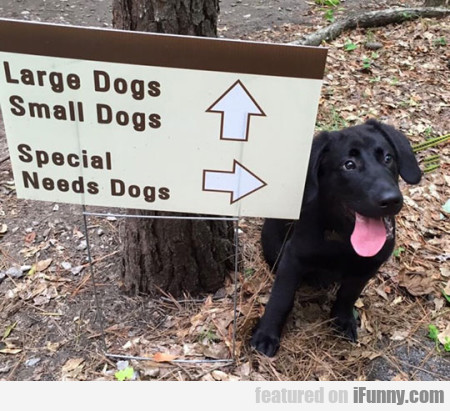 Large Dogs, Small Dogs - Special Needs Dogs...