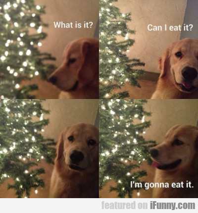 What is it? - Can I eat it?...