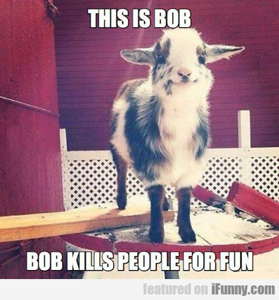 This Is Bob...