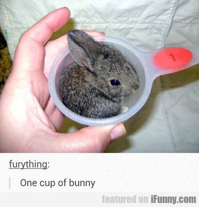 One Cup Of Bunny...