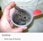One Cup Of Bunny