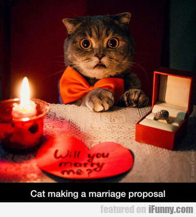 Cat making a marriage proposal