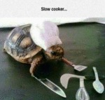 Slow Cooker...