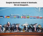 Googled Sharknato...