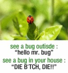 See A Bug Outside...