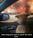 Some Dogs Just Want To Watch The World Burn..